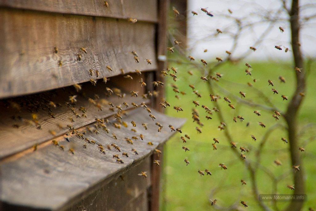 Andrang vor dem Bienenstock